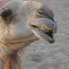 055 - 2006-05 - Dubai