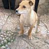 248 - 2009-03 (Mar) - China