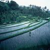 101 - 1984-12 - Bali
