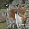 1354 - 2008-06 - Peru - Machu Picchu