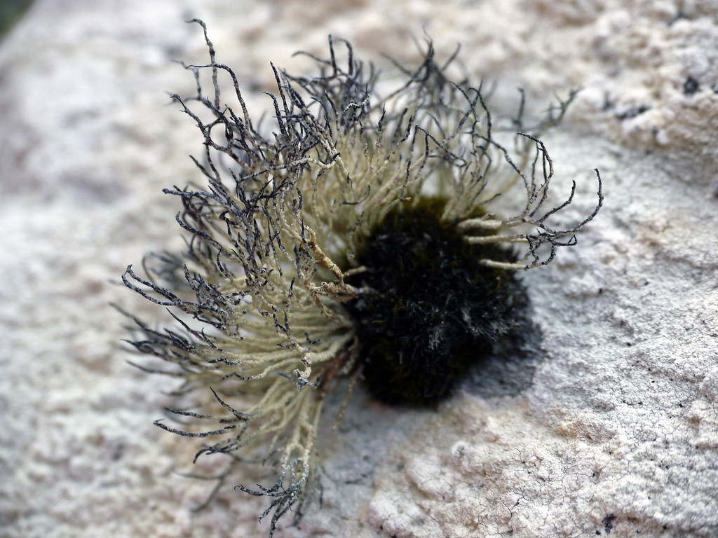 Strange lifeform at Godthul, South Georgia, British Sub-Antarctic Territory