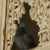 0203 - F - 128 - 2008-09 India Jaipur