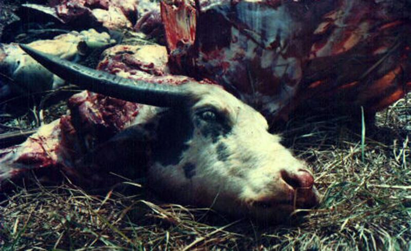 004 - 1998-11 - Tanah Toraja
