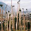 037 - 1997-11 - Bhutan