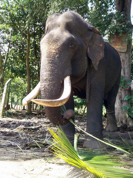 035 - 2007-11 - Sri Lanka