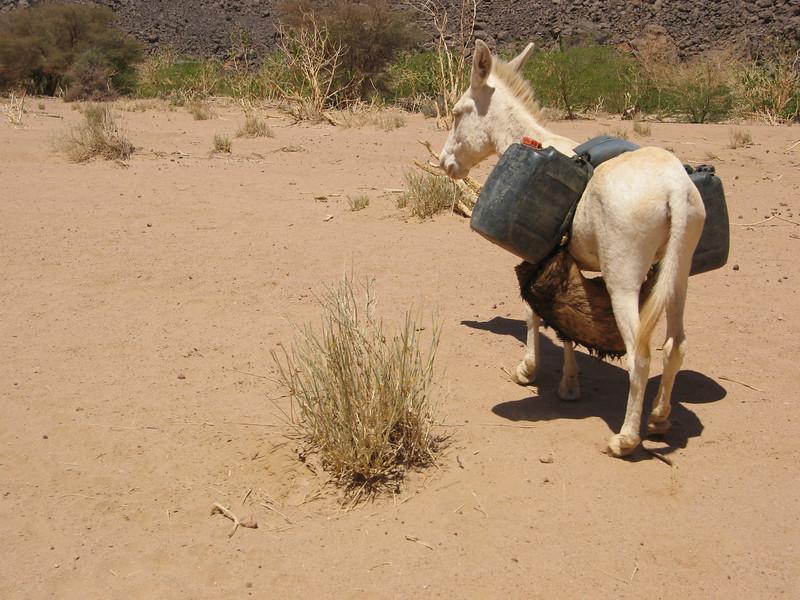 380 - 2006-03 - Algeria
