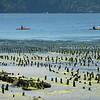 Kayaking off Orcas island in northwest Washington state