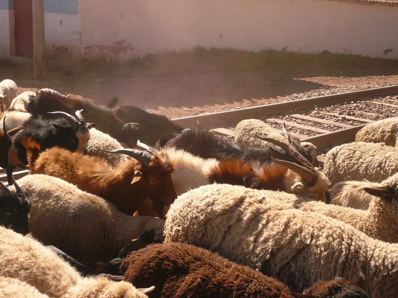 0932 - 2008-06 - Peru - Pisac