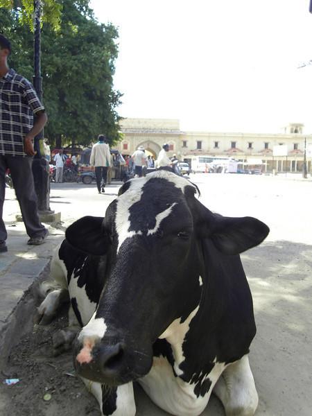 0261 - F - 166 - 2008-09 India Jaipur