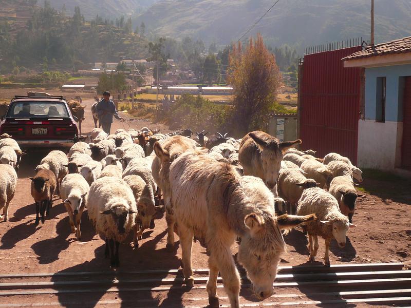 0930 - 2008-06 - Peru - Pisac