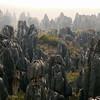 323 - 2009-03 (Mar) - China