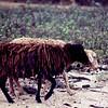 001 - 1986-08 - Trengganau