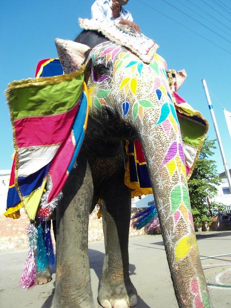 0084 - F - 063 - 2008-09 India Jaipur