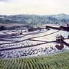 077 - 1987-12 - Tana Toraja & Bali