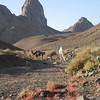 463 - 2006-03 - Algeria