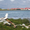 Whale bones on the shore of Grytviken, South Georgia, British Sub-Antarctic Territory