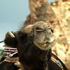 0424 - 2009-07 Turkey (Devrent Pasa Baglari chimneys)