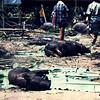 Housewarming 1987-12 - Tanah Toraja