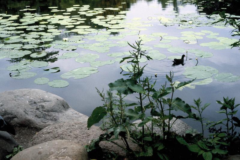 119 -1979-06 - Denmark Kobenhavn Parks