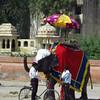 0240 - F - 150 - 2008-09 India Jaipur