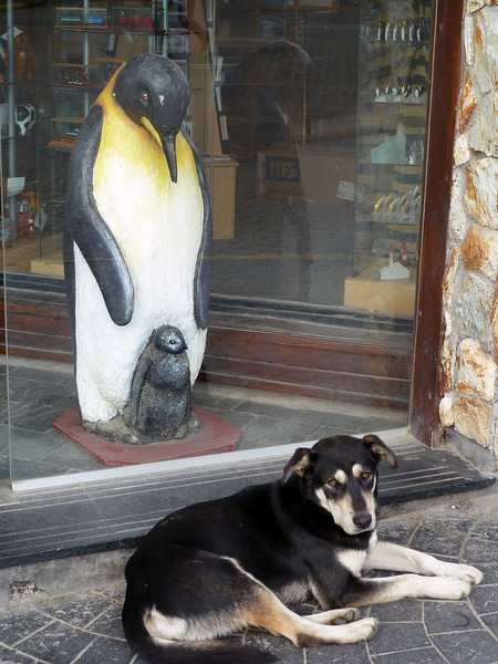 A local guard dog protects our petrified feather friends at a souvenier shop in Ushuaia, Argentina