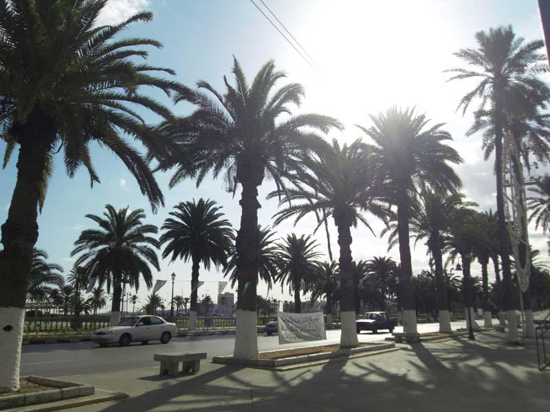 Coastal corniche palms in Tripoli Libya.