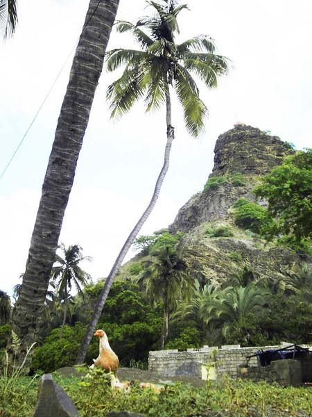 Jungle detail from rural Santiago island, Cabo Verde.