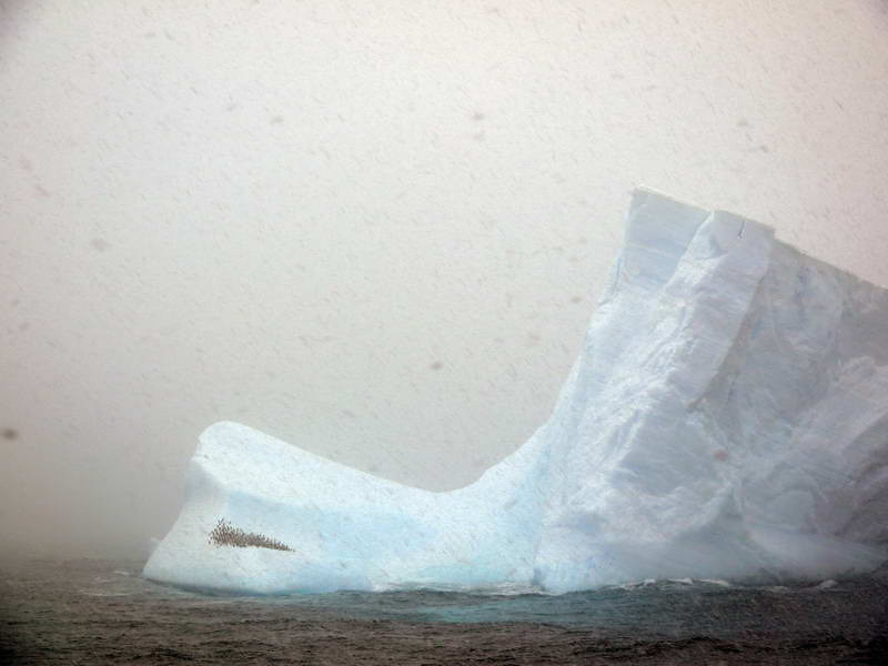 Penguin colony aboard a massive iceberg amidst a snow storm off the Palmer Coast, Antarctic peninsula