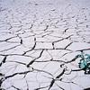 Signs of life on the arid desert floor of Sossusvlei Namibia.