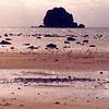 Sunset beach on the coast of Batam island, Rhiau province Indonesia, near Nagoya