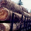 Early years destruction of the East Malaysian peninsular rainforest near Ayer Hitam Malaysia.