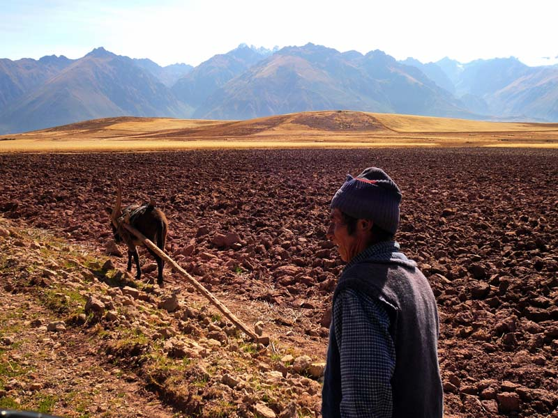 Ancient farming techniques in the shadow of the snow capped mountain range of the Urubamba valley in rural Peru.