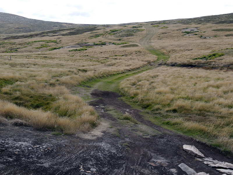 Hike to the penguin & albatross colonies on New Island, Falkland Islands