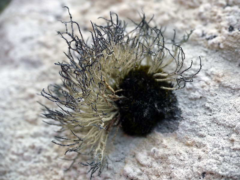 Strange lifeform at Godthul, South Georgia, British Sub-Antarctic Territory