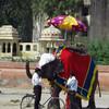 Fancy pachyderms greet us in Jaipur, Rajastan India.
