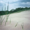 Silica & Strands at the Dunes National Lakeshore near Michigan City, Indiana USA.
