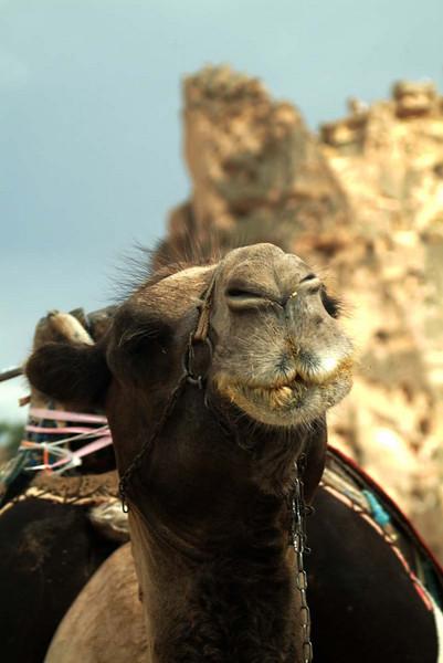 Camel poses for the camera at the Devrent Pasa Baglari (Fairy Chimneys) in Kapydokia Turkey.