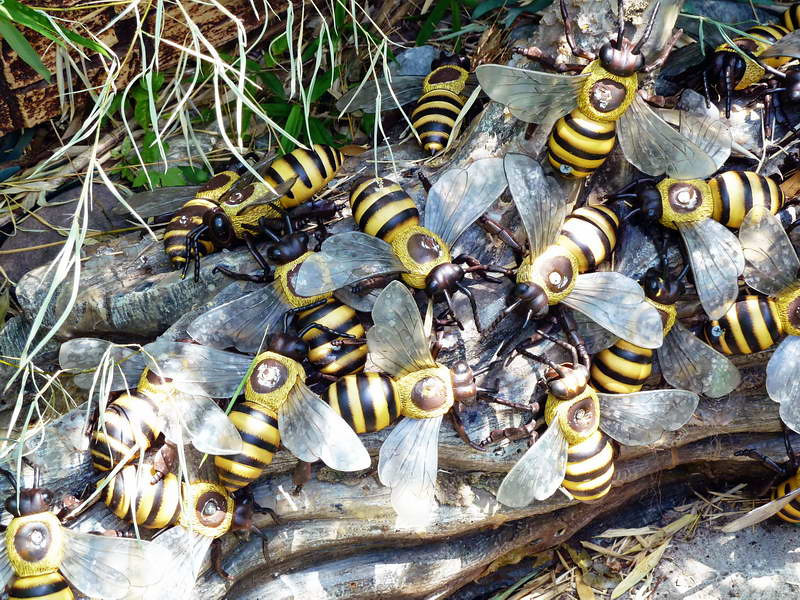 """Giant killer bees at the """"Perils of the Lost Jungle"""" mini golf range in Herndon, Virginia"""
