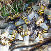 "Giant killer bees at the ""Perils of the Lost Jungle"" mini golf range in Herndon, Virginia"