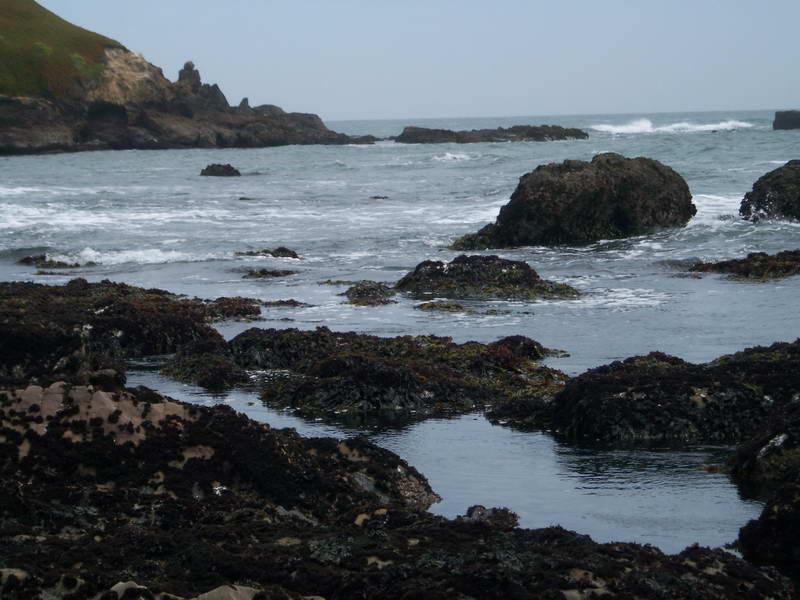 The rocky Pacific shore