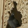 Lattice detail in the palace at Jaipur, Rajastan India.