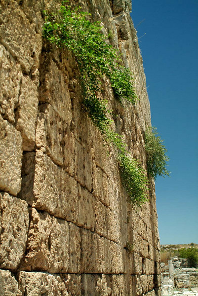 Detail of an overgrown wall in Perge along the Lycian Way, Turkey.