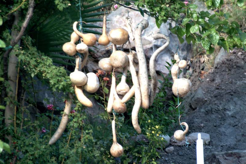 Gourds hang from the trees at a roadside cafe in Olympos along the Lycian Way, Turkey.