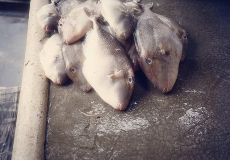Fish farm produce in Kukup Malaysia.