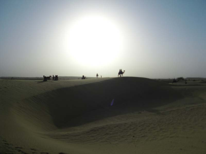 Fogbow sets the backdrop for camels on the ridge in Jaiselmer, Rajastan India.