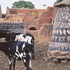 Cows imitate house painting, or vice versa in the Gurunsi village, Burkina Faso.
