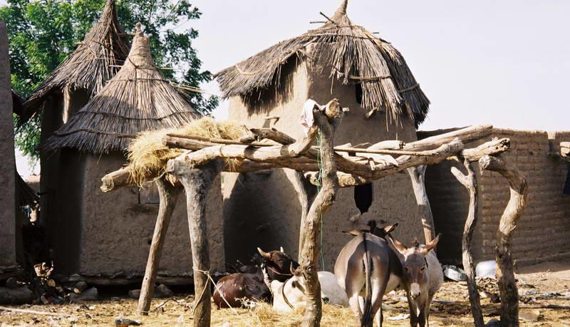 Millet storage barns in the village below the cliffs of Soungou