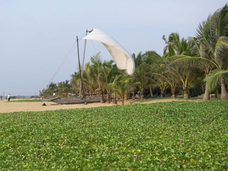 Would be sailer ON the beach in Sri Lanka
