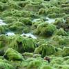 Intense sea growth along Sibaúma beach, Tibau do Sul, south of Natal, Rio Grande do Norte, Brasil