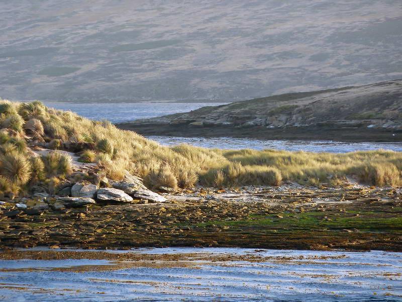 The idyllic scenery of New Island, Falkland Islands